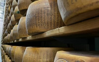 Italian Crafts: Parmigiano Reggiano Dairy Farm Visit
